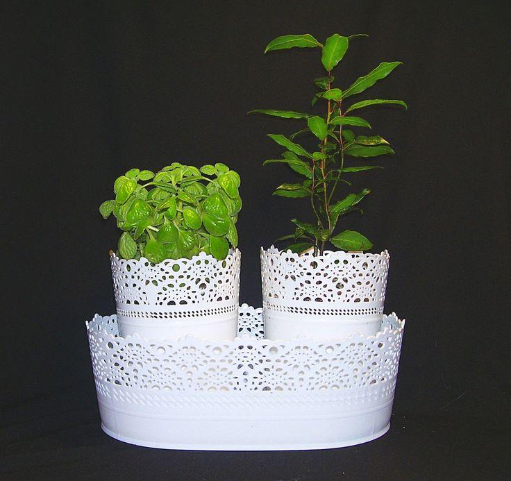 Комнатные растения и цветы. Челябинск