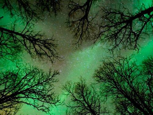 Northern lights: Green Trees, Green Green, Aurora Borealis, Trav'Lin Lighting, Lighting Lookingup, Boreal Forests, Night Sky, Auroraboreali, Northern Lighting