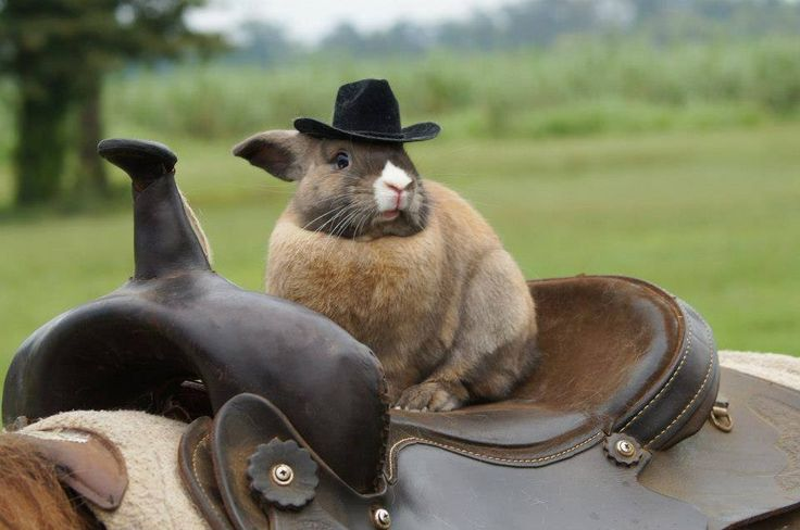 Bunny back on the horse