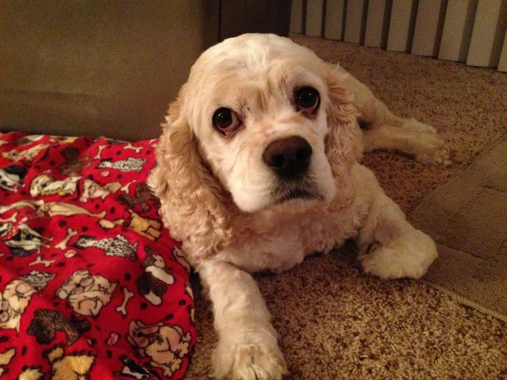 Dog Gone Problems: Why is my dog having accidents in the house after going outside? Help!