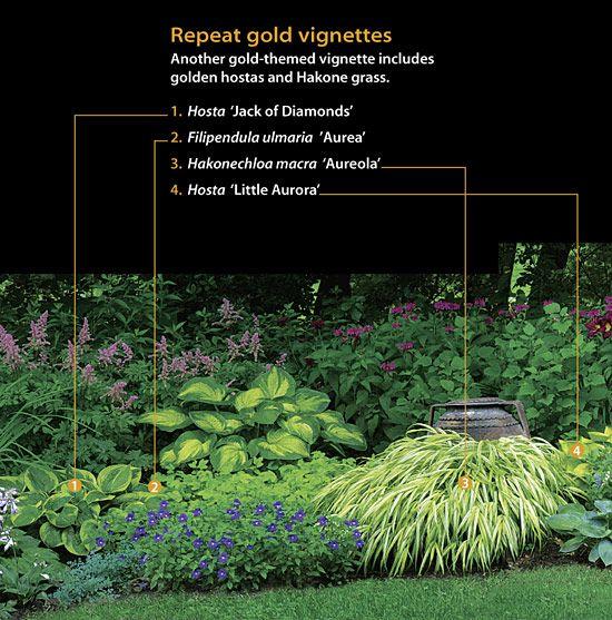 Another gold-themed vignette includes golden hostas and Hakone grass.      1  Hosta 'Jack of Diamonds'    2  Filipendula ulmaria 'Aurea'    3  Hakonechloa macra 'Aureola'    4  Hosta 'Little Aurora'