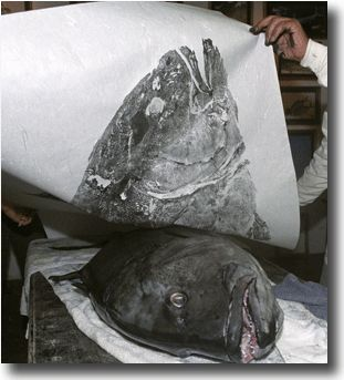 Gyotaku is a unique form of printing that uses freshly caught fish, plants and other aquatic life, to create realistic imprints on cloth or paper.