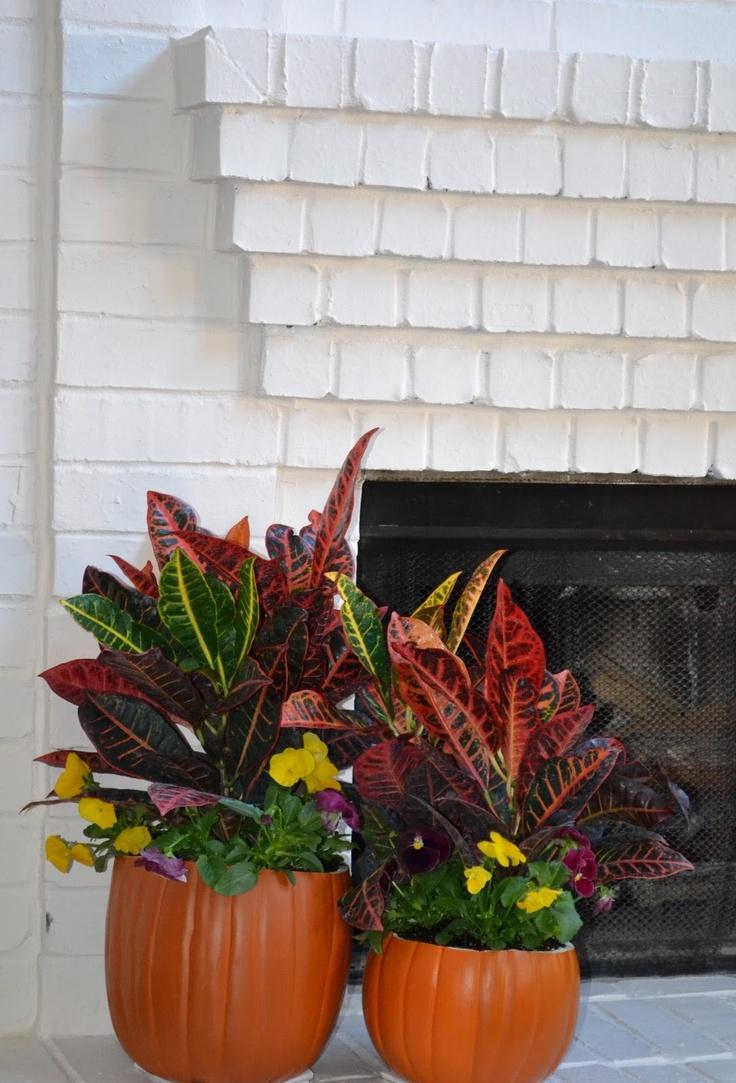 41 best indoor plant decoration ideas images on pinterest house plants indoor house plants. Black Bedroom Furniture Sets. Home Design Ideas