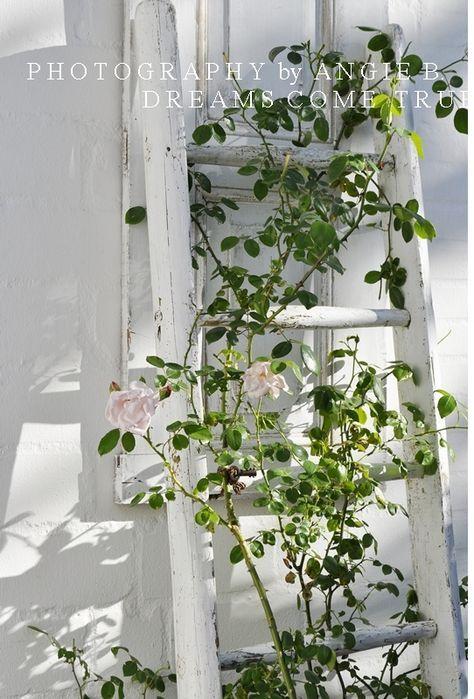 Ich Habe Eine Kleine Ecke Im Garten, Die Mein Absolutes Lieblingplätzchen  Ist. Sie Ist