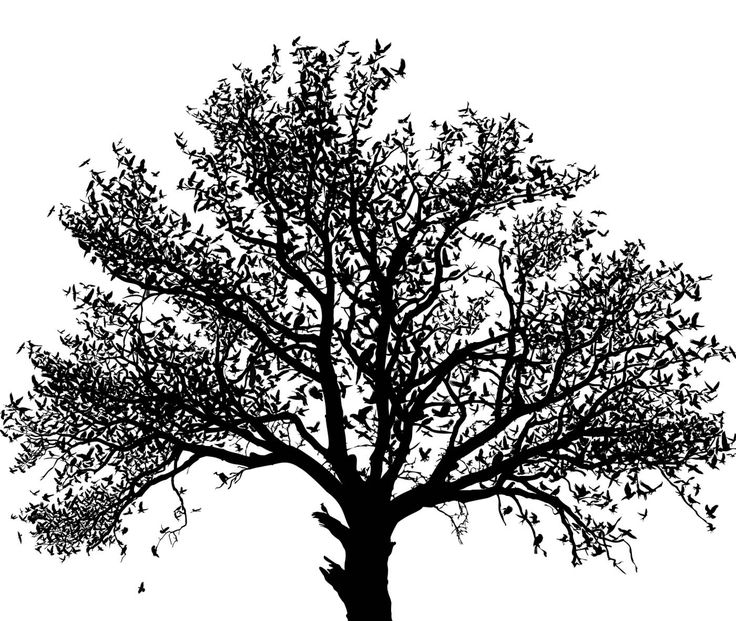 Cool Tree Black And White: 12 Best Trees Images On Pinterest