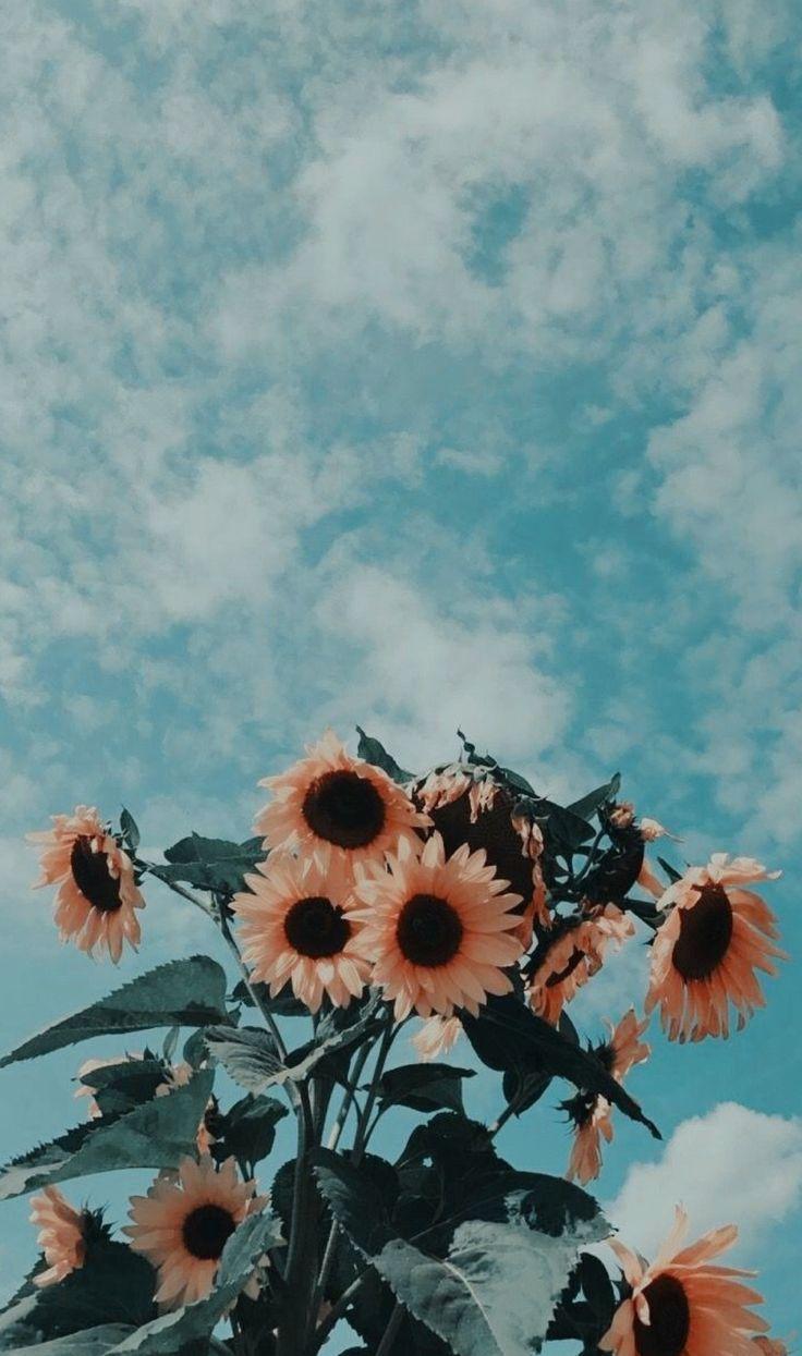 y o to to x – – rose black