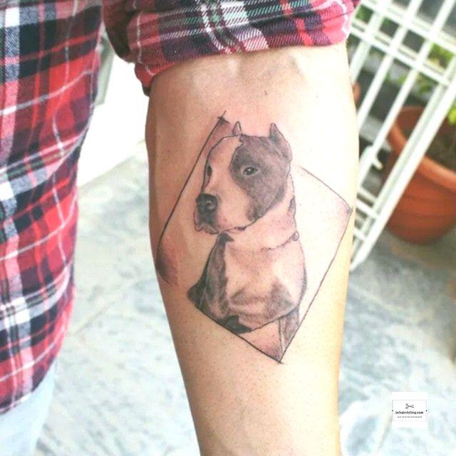 70 Pitbull Tattoo Designs Bedeutungen Fur Die Hundeliebhaber 2018 Tatoyaz