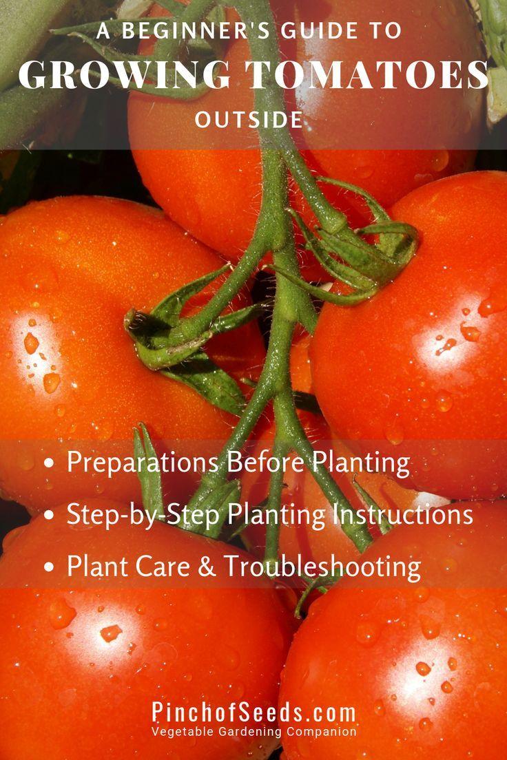 10+ When to plant tomato plants outside ideas