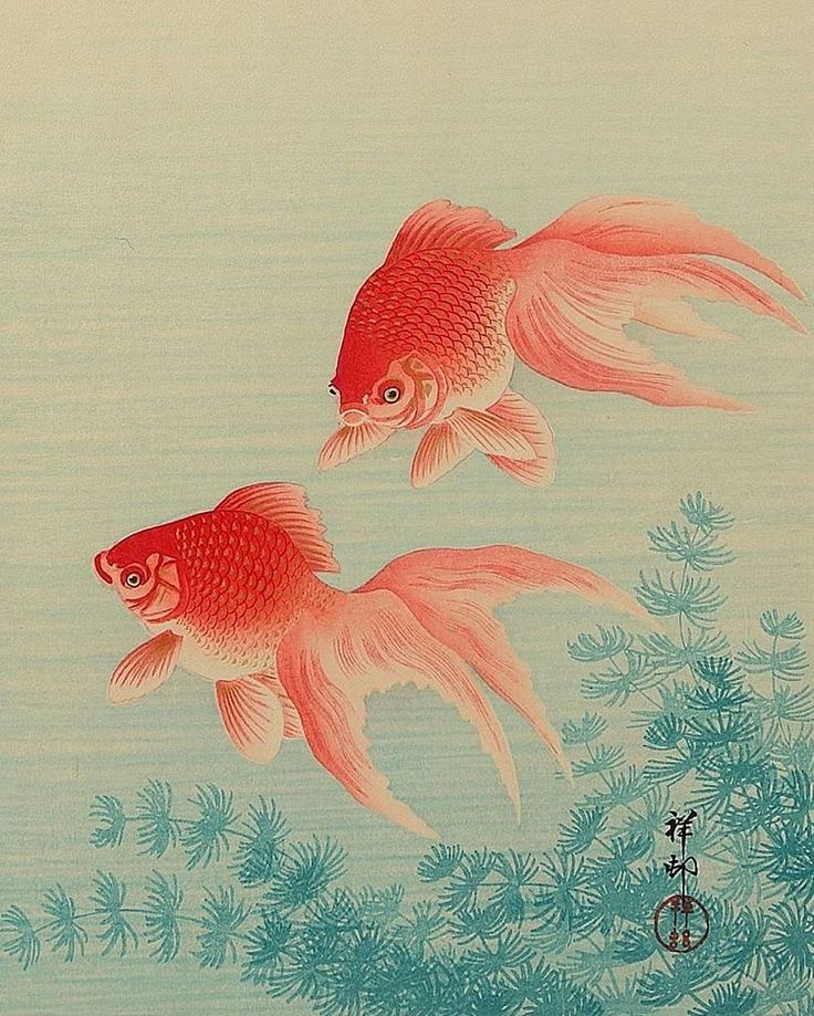 186 best images about koi kingyo reference on pinterest for Jims exotic fish