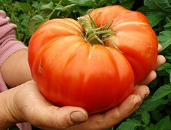 How To Grow Giant Vegetables and Plants | Bayer Advanced