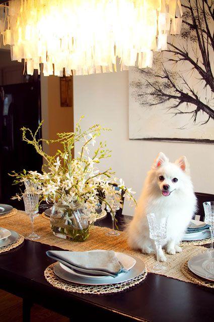 Домашние животные в понедельник на мебели - желание вдохновлять…