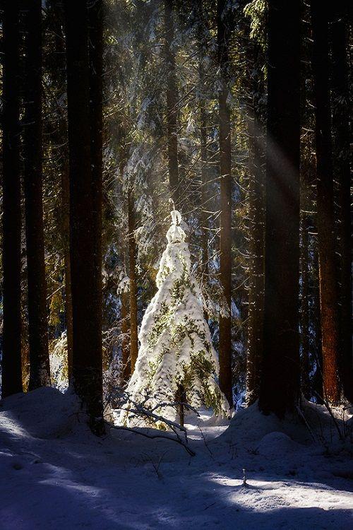 ...de voir sapin des elfes de la forêt avant qu'ils ne le décorent... Snow Tree, Veneto, Italy photo via sublim