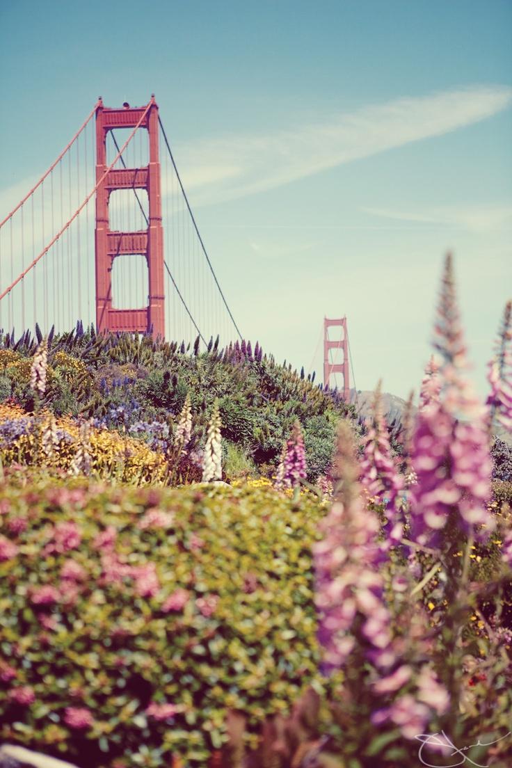 Golden Gate Park view of Golden Gate