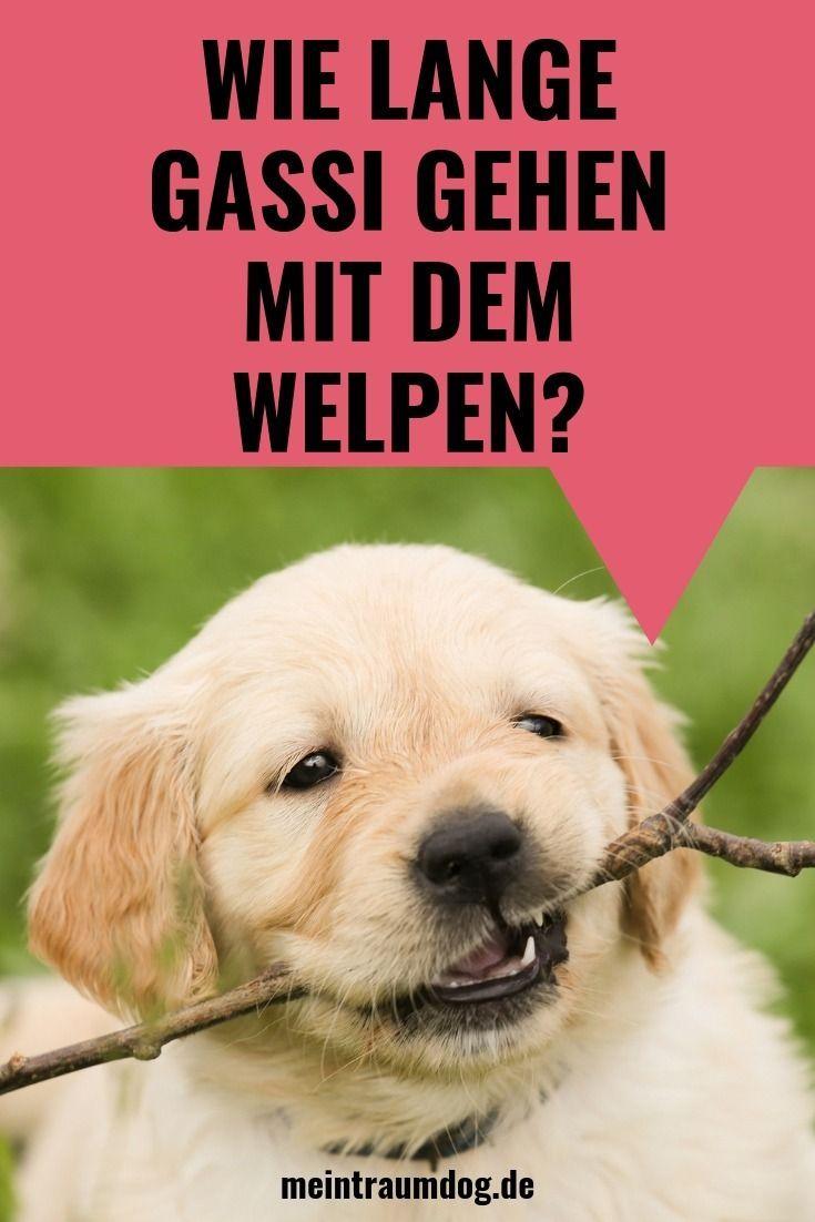 Wie Lange Gehst Du Mit Dem Welpen Die Faustregel Meine Blogbeitrage Blogbeitrage Dem Die Faustregel Welpen Hunde Welpen Erziehung Welpen Erziehen