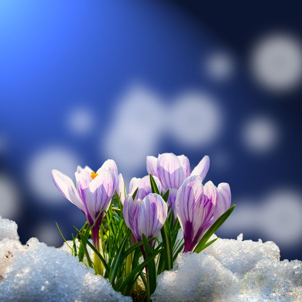 if winter comes spring is not far behind essay Celebration of nature in o wind, if winter comes, can spring be far behind if you are the original writer of this essay and no longer wish to have the.
