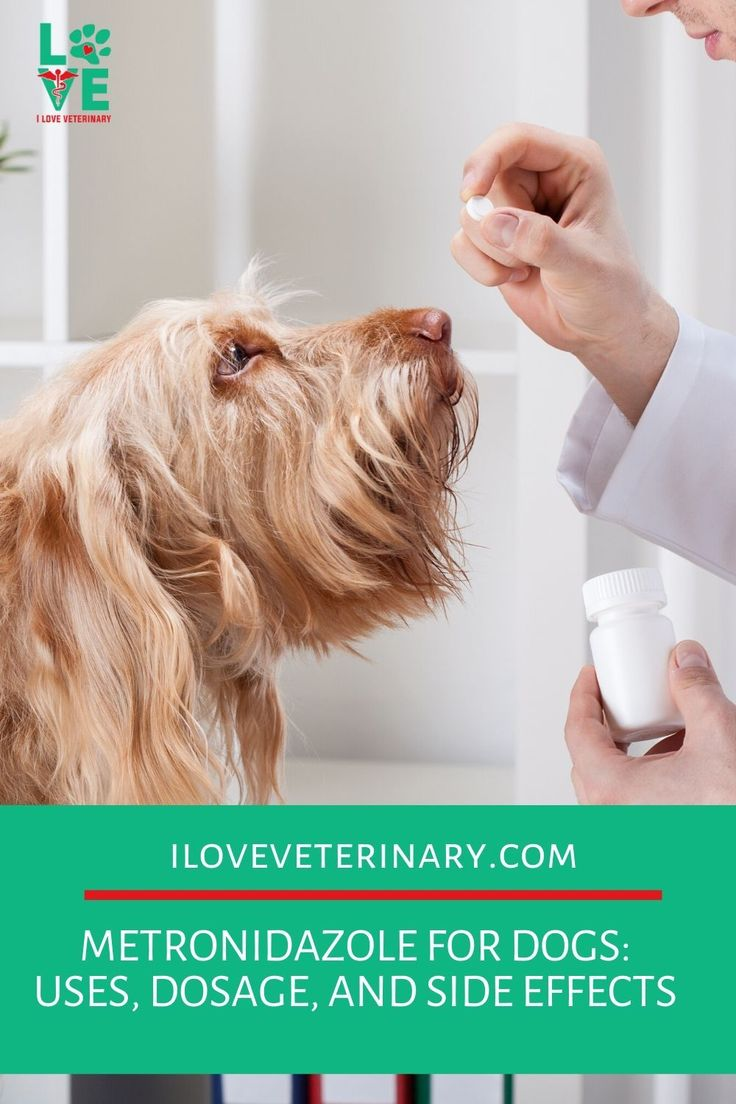 Metronidazole for dogs uses dosage and side effects in