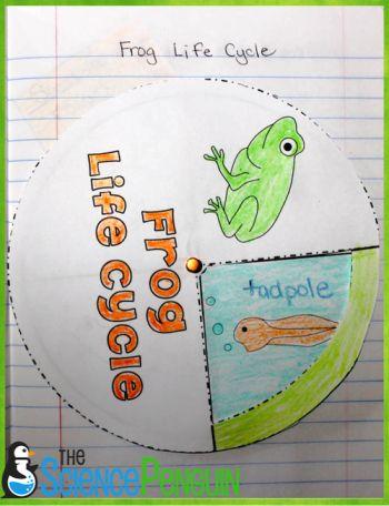 rueda de ciclo de vida de la rana en el cuaderno de ciencias de primaria