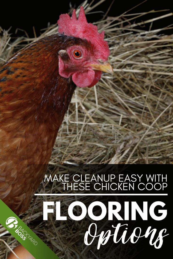 Make Cleanup Easy With These Chicken Coop Flooring Options In 2020