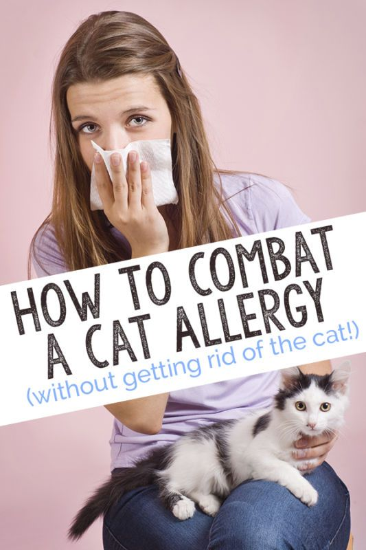 Cat allergies are nothing to sneeze at! Fortunately, there are a number of ways to combat them...without getting rid of the cat!