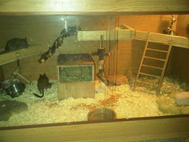 Nice DIY cage for Degus