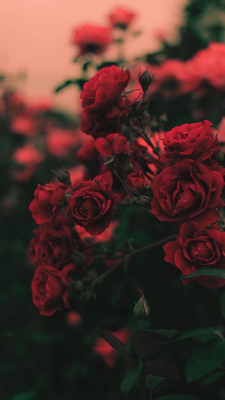 Rote Tapete. # Wallpaperideas #Hintergrundbilder Der Beitrag Rote Tapete. # Wallpaperideas erschien zuerst auf Hintergrundbilder.