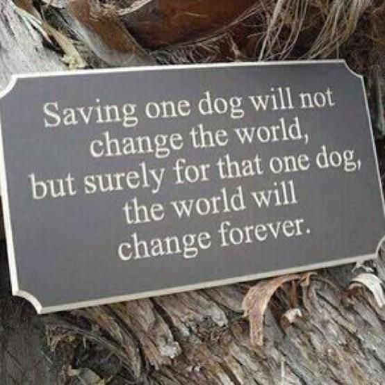 Rescue Dogs! Memories Tablet, Rescue Dog, Dogs Quotes, Adoption A Dogs, Pets, So True,  Plaque, Shelters Dogs, Animal