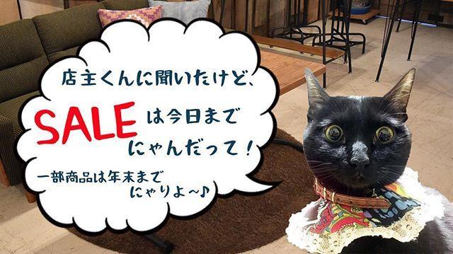 皆さまこんにちは~♪黒豆にゃりよ! ・ 今日は店主くんに頼まれてCM出演にゃり♡ ・ 遊びに来てね~♡ ・ https://item.rakuten.co.jp/abfly/c/0000000209/ ・ ・ ・ #ギャラはおチュールで♪ #黒豆さんお疲れ様です ・ ・ #黒猫  #cat  #猫好き #猫部 #黒猫同盟 #愛猫 #にゃんすたぐらむ #みんねこ #ブサカワ #白猫 #ハチワレ #キジトラ #にゃんだふるらいふ #猫との暮らし #ウェブキャットショー2 #ねこら部 #スタペグラム
