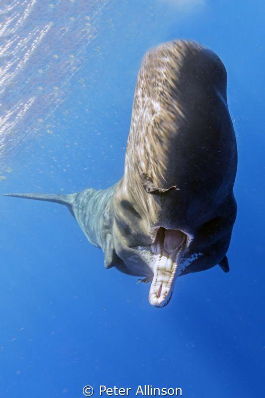 Weekly Underwater Hot Shot - Week 9 by Peter Allinson - UnderwaterPhotography.com Blog