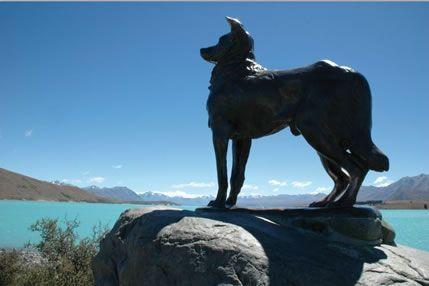 Lake Tekapo Statue to the working dog