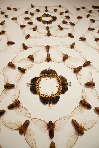 10 | Meet Jennifer Angus, An Artist Whose Medium Is Insects [Slideshow] | Co.Design | business + design