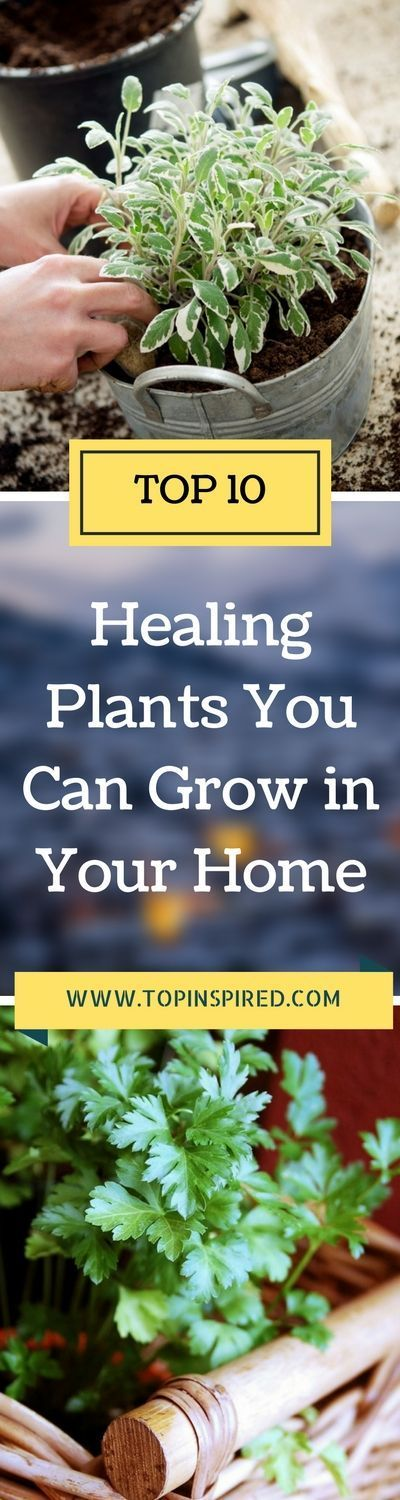 There are so many medicinal vegetables, fruits and herbs to choose from. Our list will definitely make you choose which are the best for you and which will thrive best in your home. Take a look...