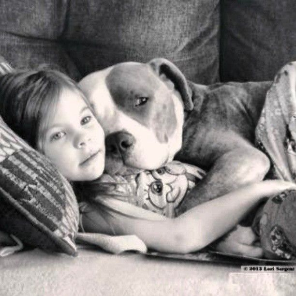 Pit bull, regardless of what anybody wants to think about them...they are some of the sweetest dogs i have ever met...we shouldnt be punishing the animal, but the human that is ignorant enough to raise them to fight...