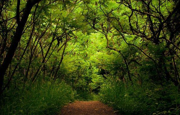 Обои природа, лес, зелень, растения картинки на рабочий стол, раздел природа - скачать