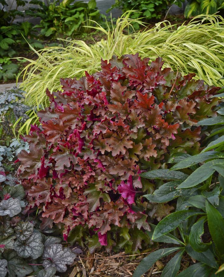 Winning the Battle: Perennials That Thrive in #Shade | #Proven #Winners