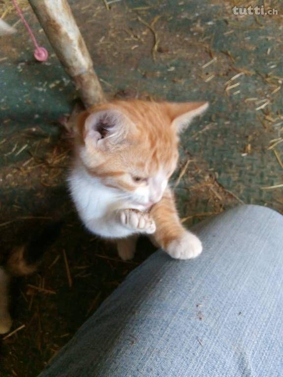Unsere Katzen Bruder Und Schwester Rot Weiss Suchen Ein Gutes