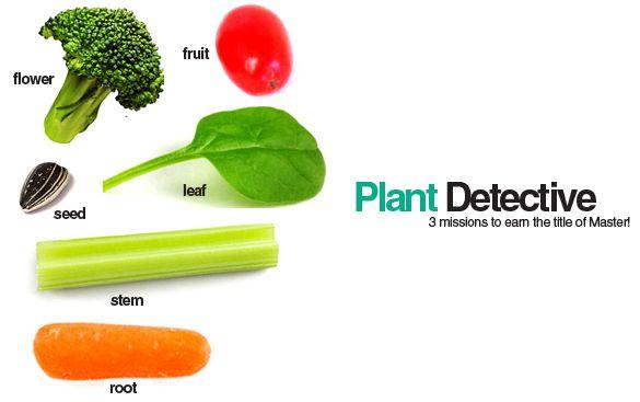Edible Plant Parts! E is for Explore!: Plant Detective: Edible Plant Parts