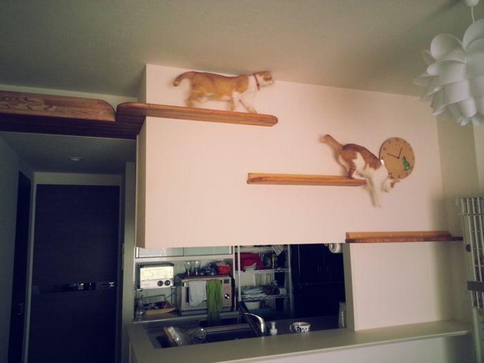 猫の幸せそうな顔がみたい 賃貸でもokなキャットウォークdiy リノベアイデア集 キナリノ キャット ウォーク Diy 猫の遊び場 猫