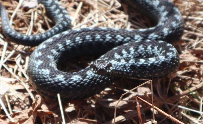 Kaunis turkoosi kyykäärme, kuin pieni lohikäärme... / beautiful turquoise snake, like a little dragon...