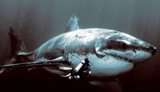 Discovery Revisits Megalodon For Shark Week 2014 Despite Backlash