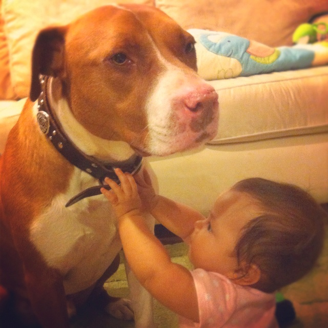 Pitt bulls are loving dogs!