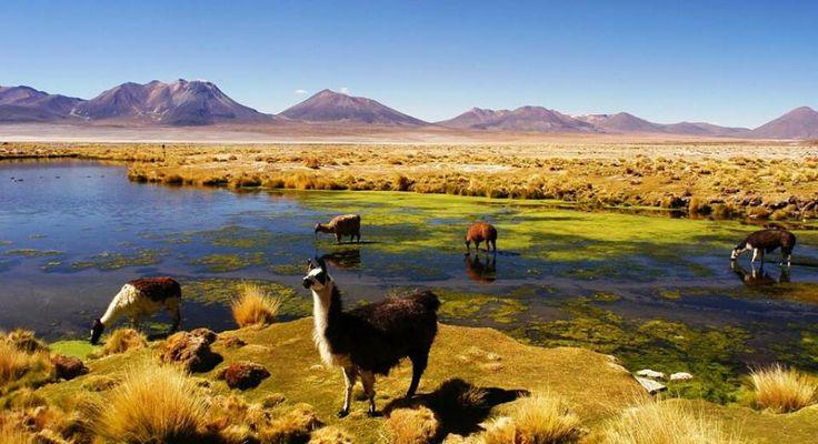 Reserva Nacional Las Vicuñas, Arica y Parinacota.