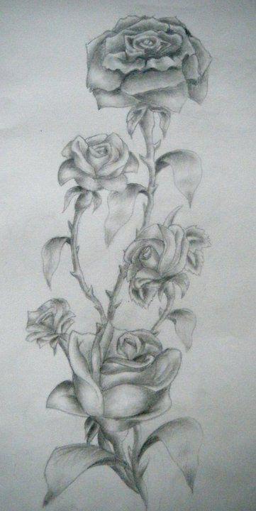 Rose Vine Tattoo Design By Charlotte Lucyy On DeviantART