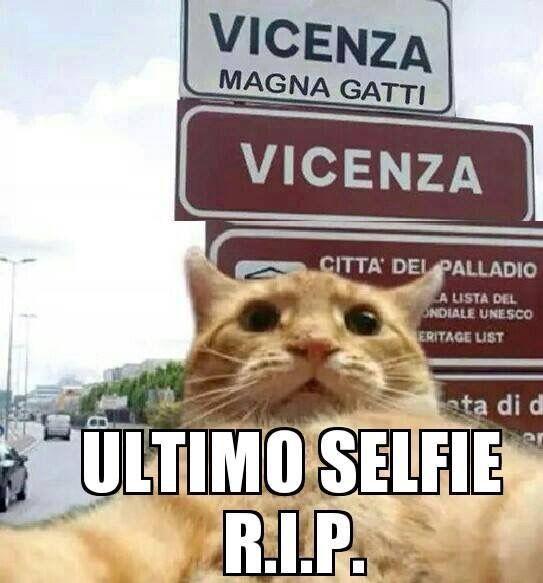 Povero gatto!!