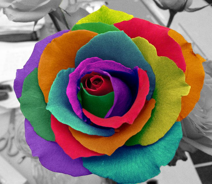 Best 25 rainbow roses ideas on pinterest different for Rainbow colored rose