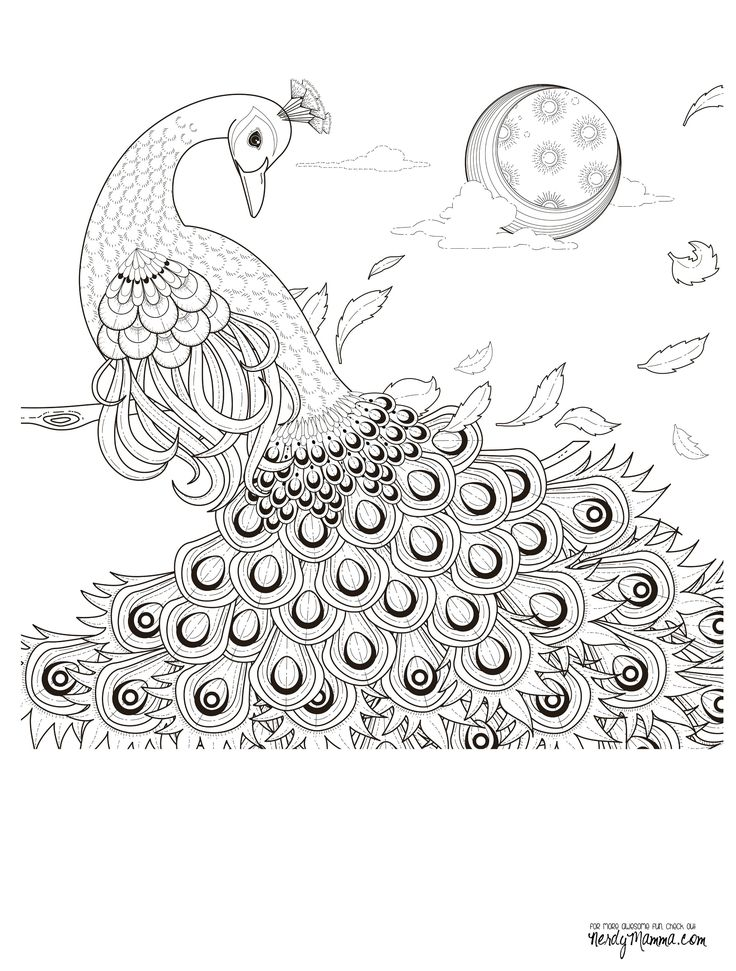 peacock feather coloring pages colouring adult detailed advanced printable kleuren voor volwassenen coloriage pour adulte anti - Detailed Coloring Pages 2