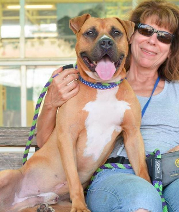 Benny had a rough start in life, but he still loved humans enough to protect them from a burglar, eventually securing his forever home.