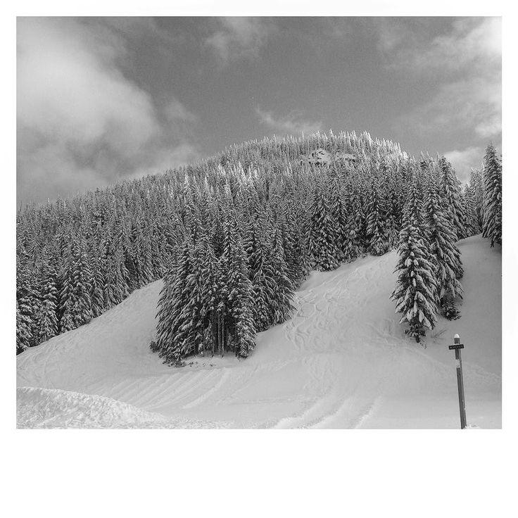 Black and White - Skibowl #monthofblackandwhite #blackandwhite #skibowl #mounthood #mthood #oregon #oregonexplored #pnw #pnwisbeautiful #upperleftusa #pnwphotographer #snow #trees #governmentcamp