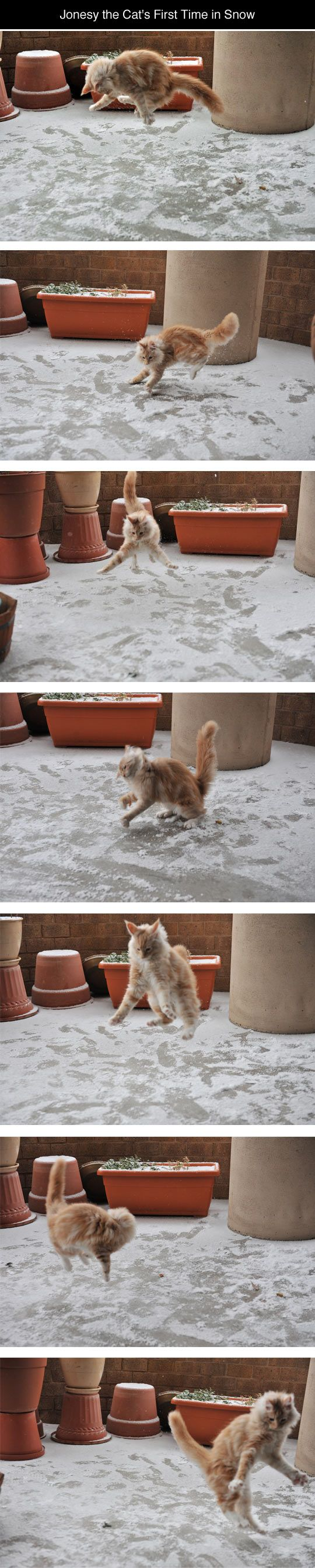 A cat's first encounter with snow