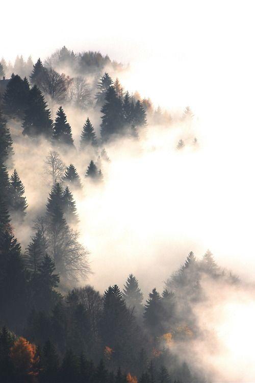 Smokey, mysterious, asymmetrical, high contrast, moist, clouded, dramatic.
