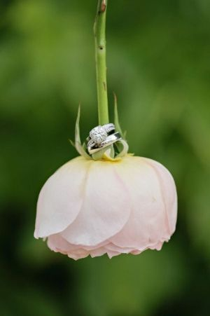 Wedding Photo Idea: ring on a flower
